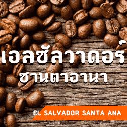 เมล็ดกาแฟ เอลซัลวาดอร์ ซานตาอานา