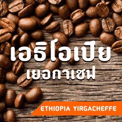 เมล็ดกาแฟ เอธิโอเปีย เยอกาเชฟ