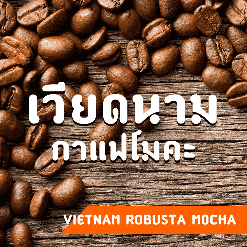 กาแฟเวียดนาม Vietnam Robusta Mocha coffee beans. กาแฟโมคะ